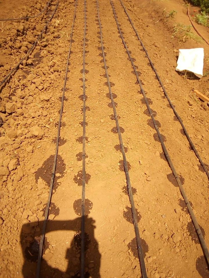 drip irrigation photo